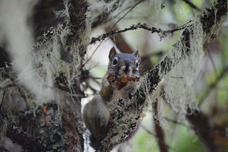 Animals In The Wild Animal Wildlife Animal Kanada Wells Gray Provincial Park Canada Beauty In Nature Hikingadventures Wanderlust Squirrel Squirrel Closeup Trapped Spider Spider Web Insect Close-up Chipmunk Growing