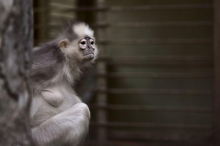 Monkey Business Image Fotografia Traveling World Eyemphotography Fotografi Animal Wildlife Photography Photo EyeEm