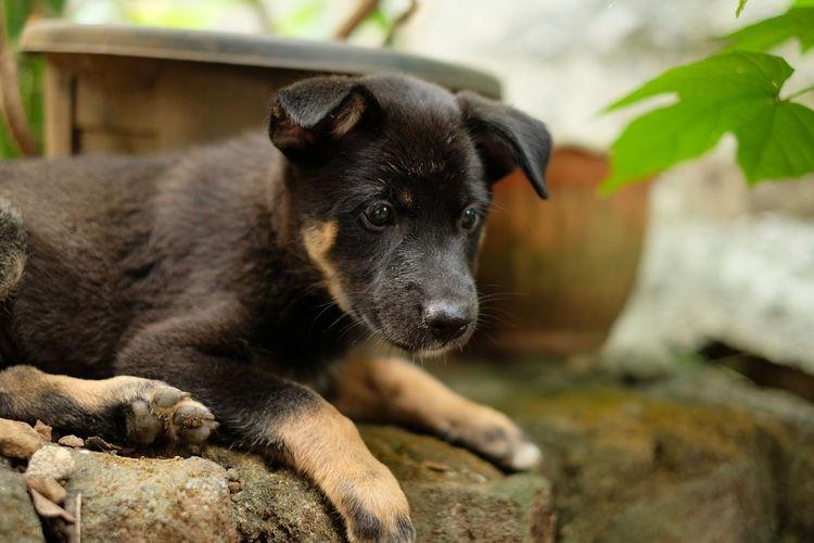 Suprised puppy