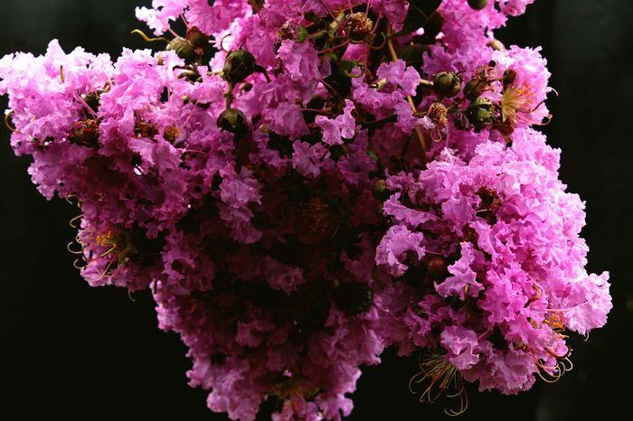 Flores del hogar. Flower Pink Color House DiegoGrafo Canon RebelT6 Ponpon Flores Bello Latinoamerica Europe Europa USA Chile Hobbies Motivacion Photography Photo Natural Naturaleza