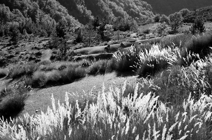 Beauty In Nature Black & White Black And White Blackandwhite Contrast EyeEm Best Shots - Black + White EyeEm Nature Lover EyEm Best Shots - Landscape Grass Landscape Nature No People Outdoors Summer Tranquil Scene Tranquility Uncultivated Valley Wilderness Area Fine Art Photography Fine Art