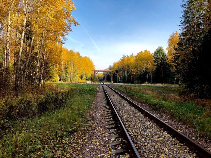 Tree Plant Rail