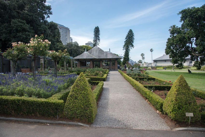 SYDNEY,NSW,AUSTRALIA-NOVEMBER 20,2016: Royal Botanic Gardens with rose garden, outdoor architecture and view of the Sydney Harbour Bridge in Sydney, Australia. Architecture Australia Bench Botanical Gardens Growth Plant Royal Botanic Gardens SP Sage Sydney Harbour Bridge Tourist Bloom Blossom Building Exterior Cultivated Flower Formal Garden Garden Landscaped Outdoors Real People Rose - Flower Rose Garden Roses Sydney