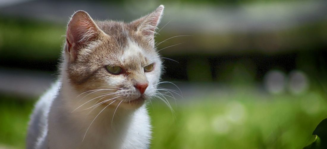 Alertness Animal Head  Animal Themes Cat Close-up Curiosity Depth Of Field Domestic Animals Domestic Cat Feline Looking At Camera Mammal No People One Animal Pets Portrait Relaxation Relaxing Selective Focus Whisker Zoology