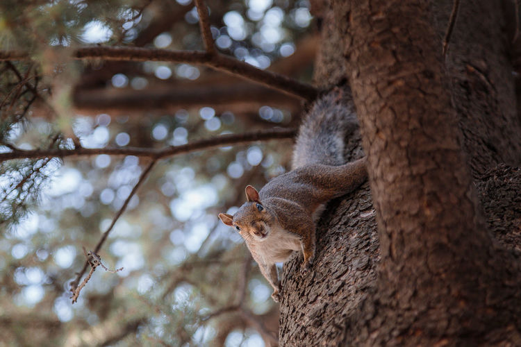 EyembestshotFirsteyeempictureAnimal Themes Architecture Branch Focus On Foreground Low Angle View Mammal No People One Animal Selective Focus Squirrel Eyeemphotography EyeEmBestPics EyeEm Best Shots EyeEm Nature Animal Eye First Eyeem Photo Looking At Camera Zoology