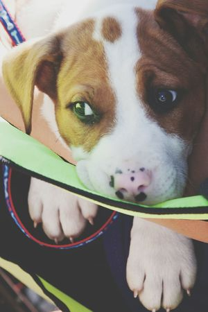 Lucas has the cutest nose! Dog Woof Need A Friend Pets Hello World Volunteer Adopt Missouri 1