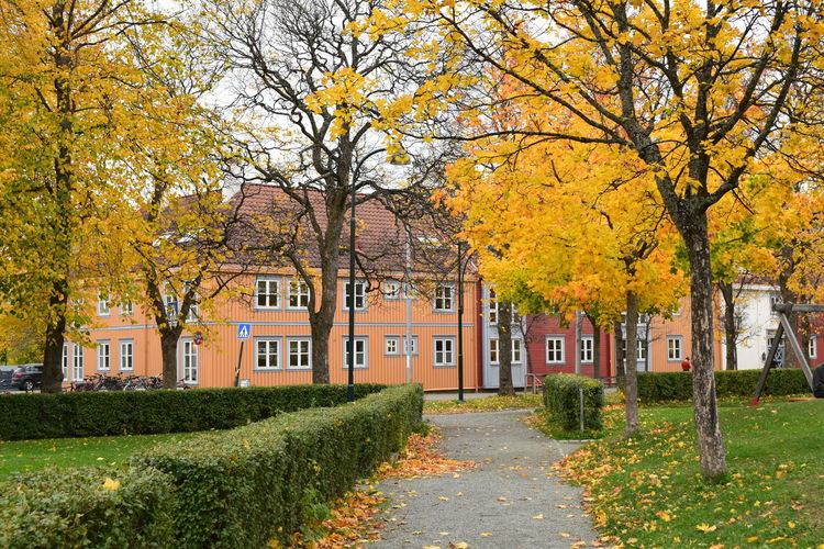 Autumn in a city park, Trondheim, Norway. Park Autumn In Park Autumn Nature Change Residential District Beauty In Nature Footpath City Yellow Outdoors No People Park Path Park Pathway Leaves On A Tree Leaves On A Path Tree Orange Color
