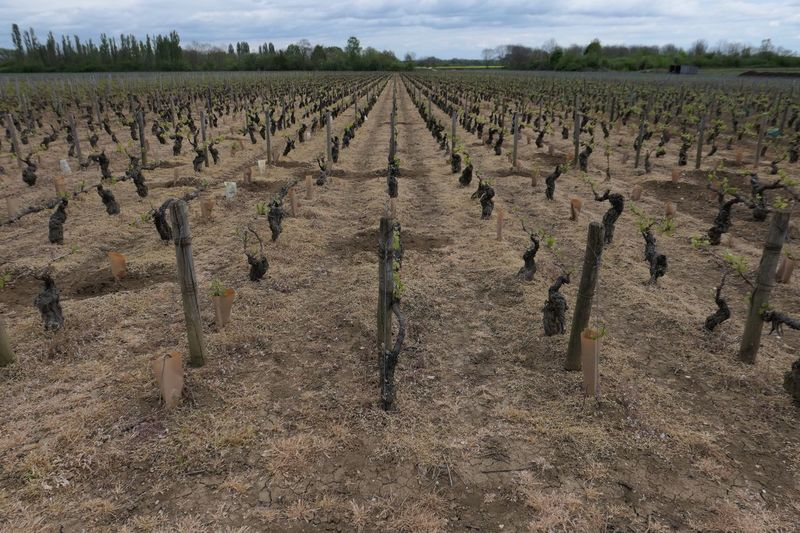 France Agriculture Vineyard Round Up Grass Kiiller No People Conventional Agriculture Burgundy Glyphosate