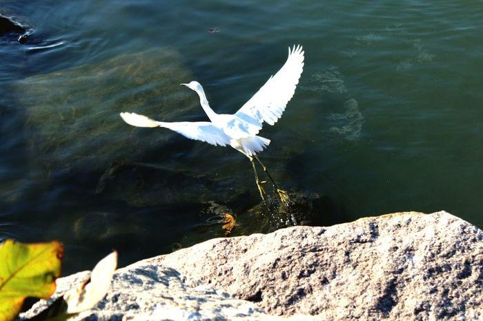 Bird Garca Florianópolis Brasil Passaro Nature First Eyeem Photo