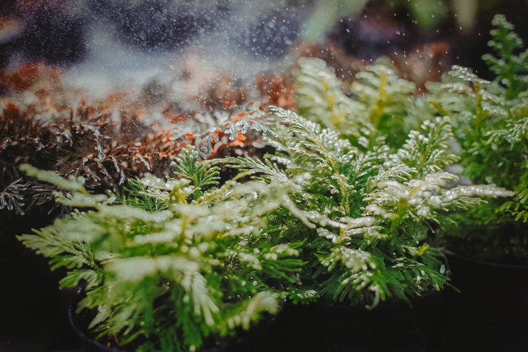 Beauty In Nature Close-up Ferns Green Color Growth Nature Plant Water Winter