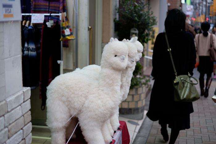 ミラバケッソ~!(笑) Alpaca Cute Fujifilm Fujifilm X-E2 Fujifilm_xseries Japan Japan Photography Kagurazaka Relaxation Street Streetphotography Stuffed Toy Tokyo Toy Xf35 アルパカ 日本 東京 神楽坂