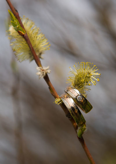Close-up of wedding rings hanging on twig