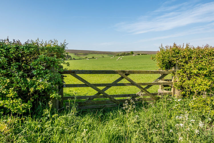 North Yorkshire North Yorkshire Moors Yorkshire Dales Yorkshire Countryside Farmland Field Fields Gate Farm Gate Plant Land Green Color Growth Landscape Grass Nature No People Environment Boundary Tranquility Fence Rural Scene Tranquil Scene Agriculture