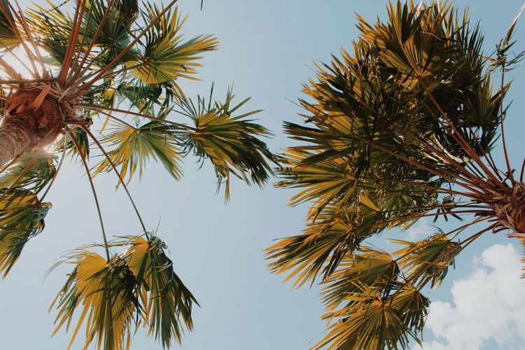 Low angle view of coconut palm tree against clear sky