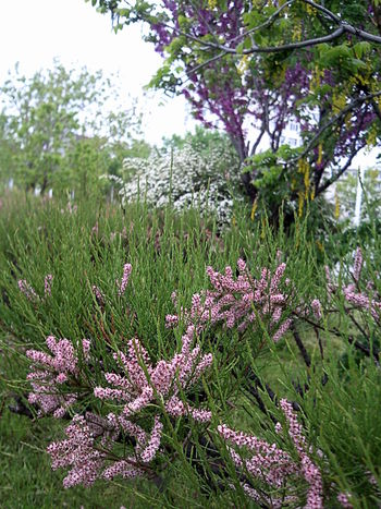 Bloom Bush Bushes Close Up Flowering Bushes Freshness Green May Nature Purple Purple & Green Spring Springtime
