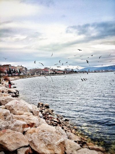 Nature Natural Beauty Eğirdir Lake Mew Gull Sea Gull Hello World Relaxing Turkey