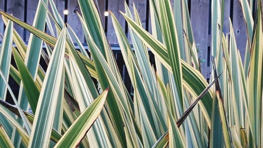 Plant Long Leaves Wooden Post The Week On EyeEem