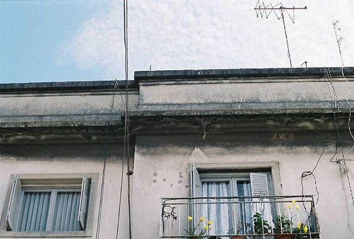 Nikonf301 Fotografiacolor Fotografiaanalogica Analoguephotography Colorphotography Flower Flores Balcon Balconflowers Floresdebalcon