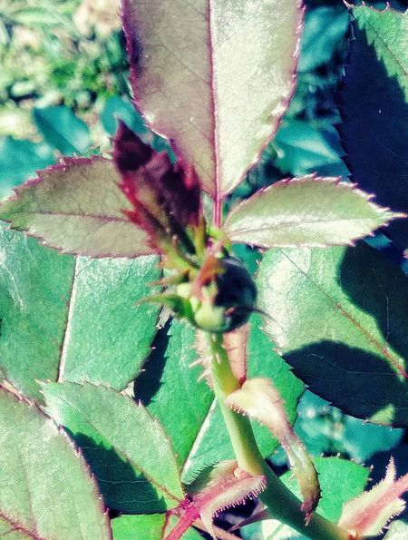 Nature Beauty Plant Part No People Outdoors Beauty In Nature Day Fragility Close-up Green Color Close Up
