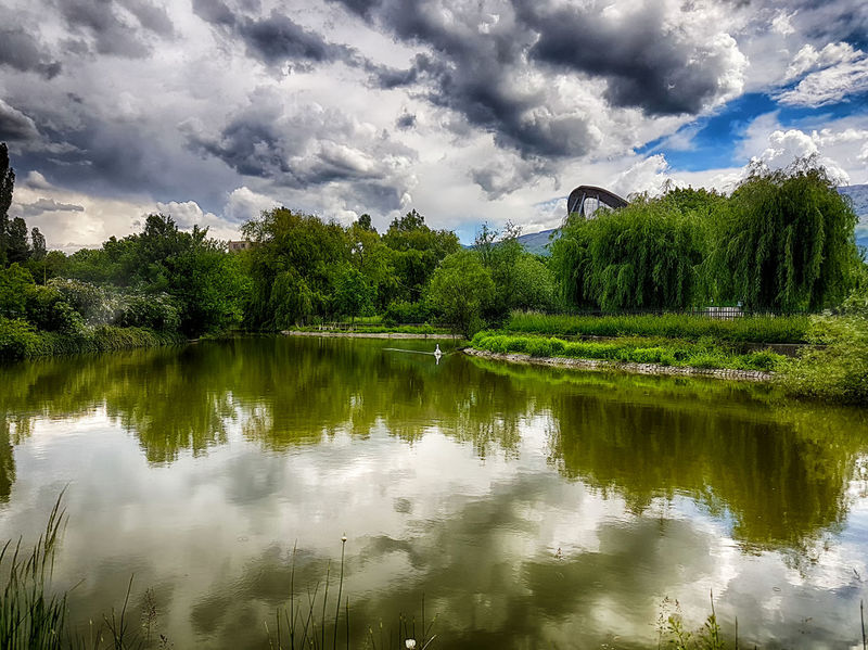 Swan shot at the local lake. Beauty In Nature Calm Cloud Cloud - Sky Cloudy Day Green Color Growth Idyllic Lake Nature No People Non-urban Scene Outdoors Overcast Reflection Scenics Sky Standing Water Swan Swan Lake Tranquil Scene Tranquility Tree Water Perspectives On Nature