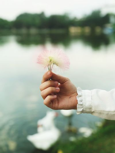 Cropped image of hand holding plant at lake