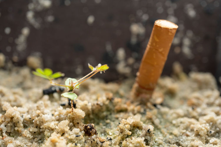 Close-up of cigarette against blurred background