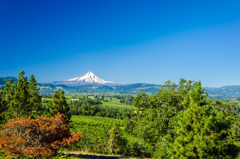 Distant view of snowcapped mt hood by landscape against blue sky