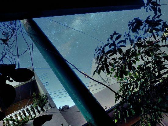 Sky Stars Starry Night Plants EyeEm Nature Lover EyeEm Best Edits Shillouette Nature