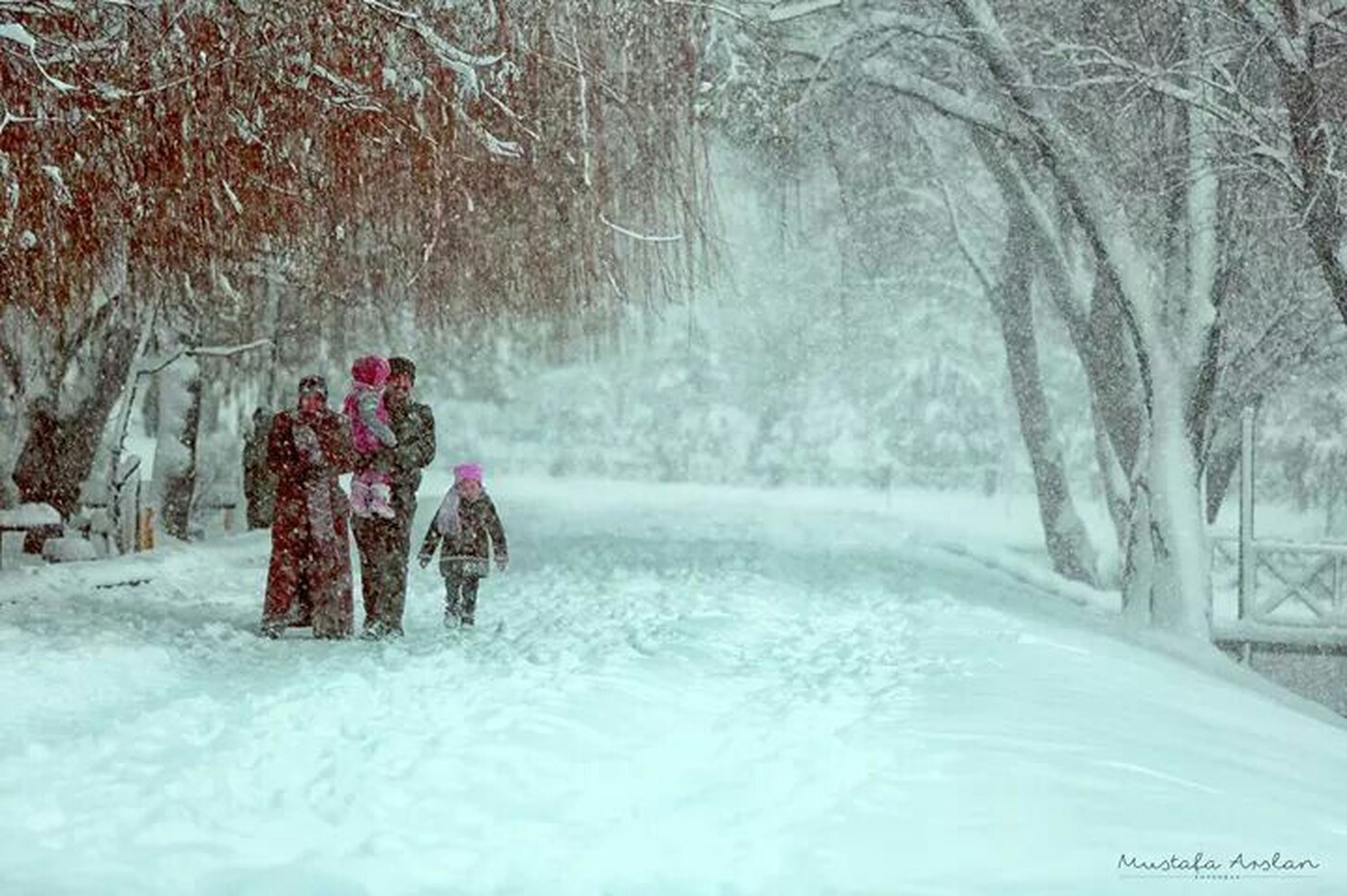 winter, snow, cold temperature, season, weather, tree, lifestyles, leisure activity, warm clothing, full length, bare tree, men, covering, rear view, field, dog, frozen, park - man made space