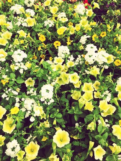 Growth Plant Beauty In Nature Green Color Full Frame Flower Freshness Yellow Flowering Plant Plant Part