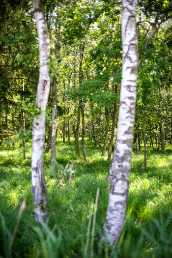 Auszeit an der Ostsee Baltic Sea Exploring Nature Naturschutzgebiet Ostsee Ostseeküste Travel Beauty In Nature Day Environment Field Forest Grass Green Color Growth Land Nature No People Ocean Outdoors Plant Scenics - Nature Tranquil Scene Tranquility Tree Tree Trunk Trunk WoodLand