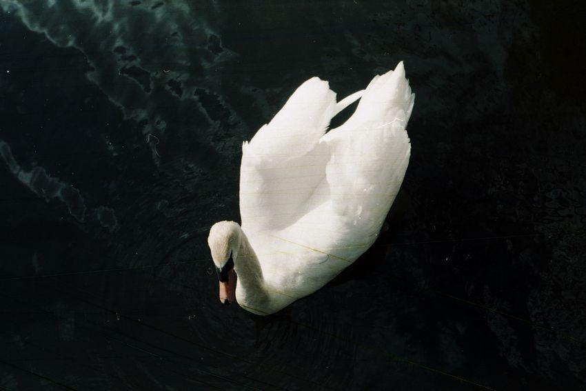Expired Film Lines Filmroll Special Reves Lac Fragile Analogue Dark Dreams Loner Treasure Deep Floating No People Swan Water