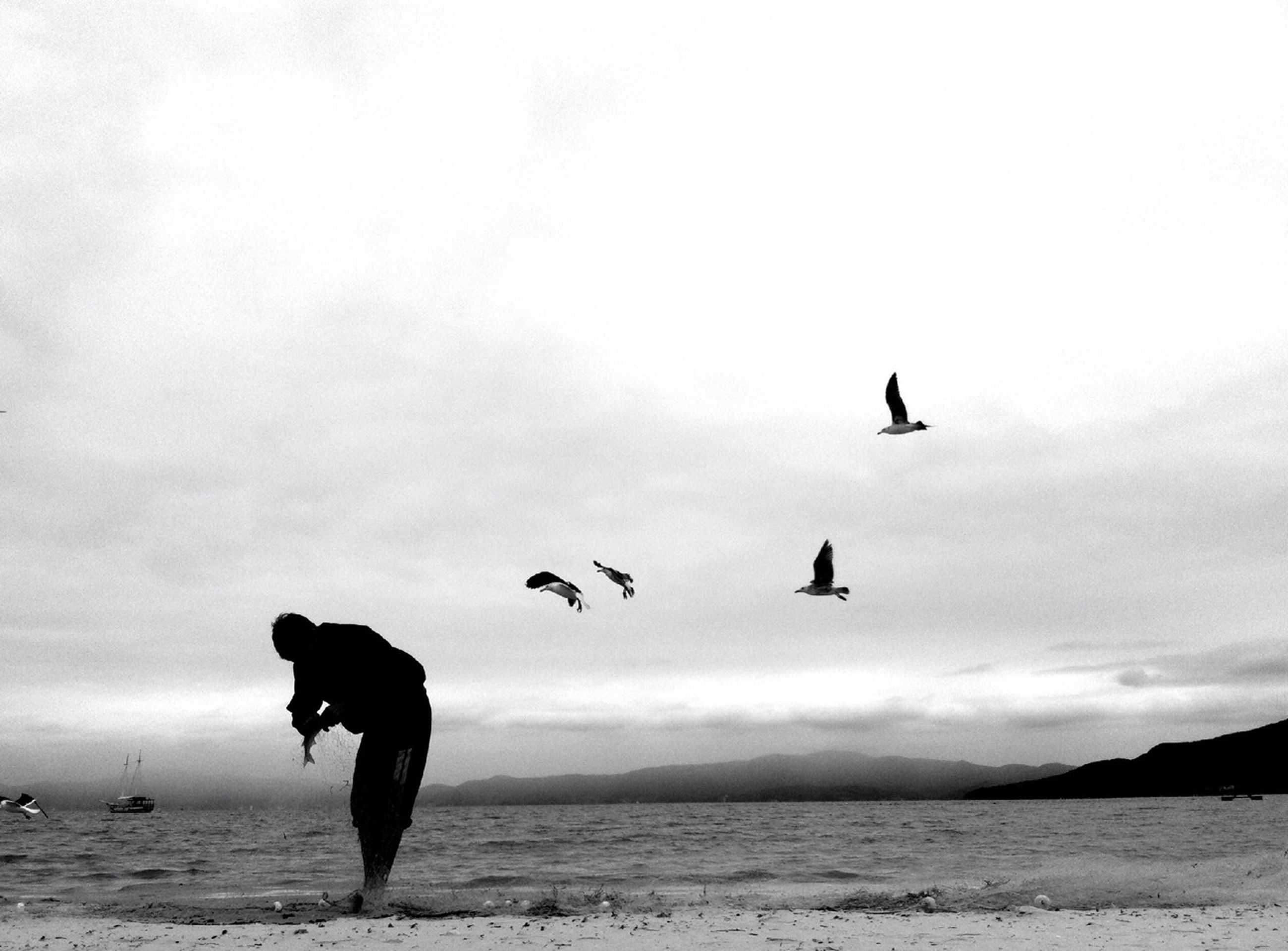 bird, sea, animal themes, water, silhouette, horizon over water, animals in the wild, flying, sky, wildlife, beach, seagull, nature, shore, beauty in nature, tranquility, spread wings, full length, tranquil scene, scenics