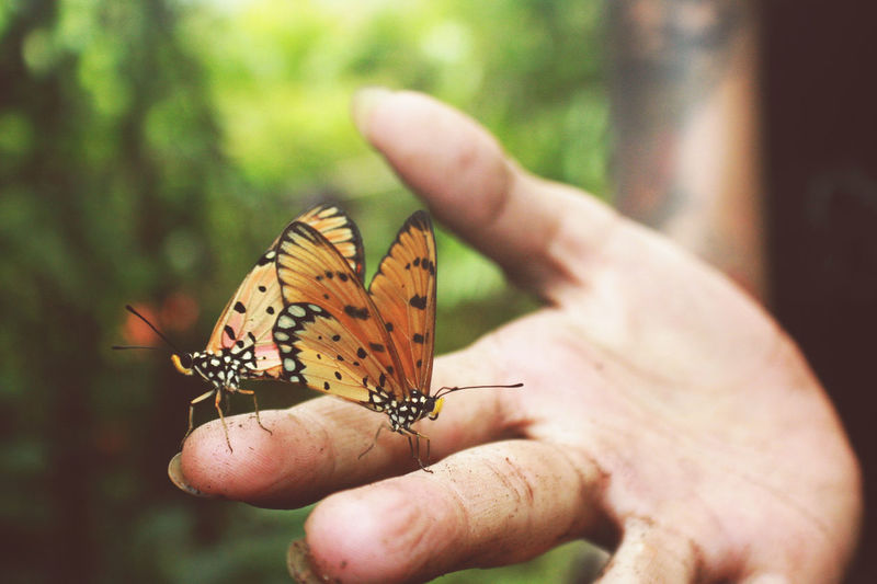 Cropped Hand Of Person Holding Butterflies