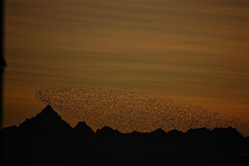 Sunset Flock Of Birds Monviso Sunset_collection Mountain View Sunset Mountains My City Beauty In Nature Peace And Quiet Peaceful Silhouette No People Sunset Outdoors Mountain Nature Sky The Graphic City The Great Outdoors - 2018 EyeEm Awards