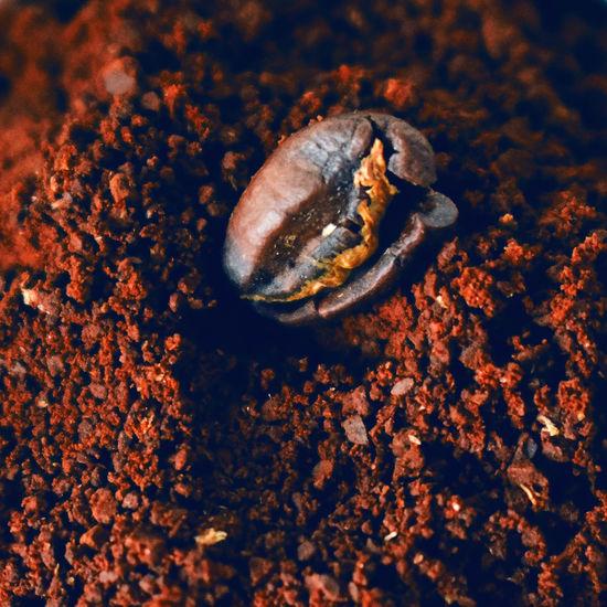 Close-up coffee bean