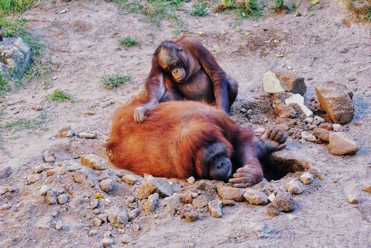 Zoo Jalisco Guadalajara Animal Themes Animal Mammal Land Vertebrate Nature Animals In The Wild Animal Wildlife Relaxation No People Day Two Animals
