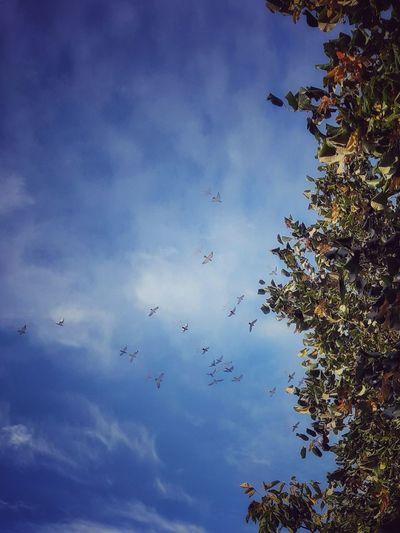 Birds on autumn