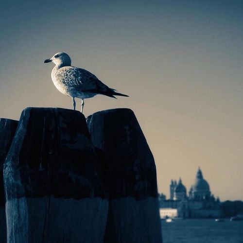 Venedig Italy❤️ Italien Häuserfront Venezia Venedig Lido Bird Animal Vertebrate Outdoors Sky Day One Animal Building Exterior Nature Clear Sky Focus On Foreground City
