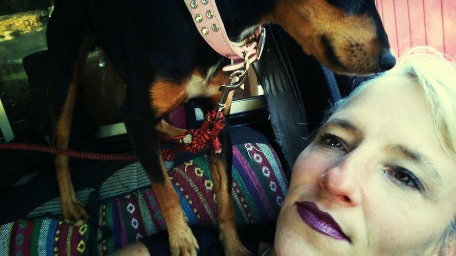 EyeEm Selects Outdoors One Person Domestic Animals One Animal Pets Adult Mammal Minpin Chihuahua Minpinbuddies Minpinterest Minpins Dogslife