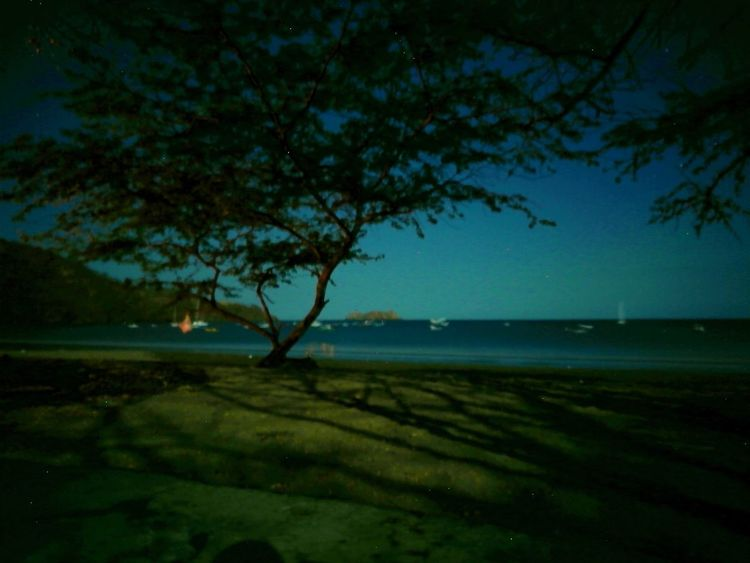 Playa Hermosa, night picture. Playa Hermosa Nightphotography Night Photography Guanacaste  Costa Rica Beach Photography Beachphotography Playa Sin Filtros No Filters Or Effects Tree Plant Night Sky Nature Water Beauty In Nature