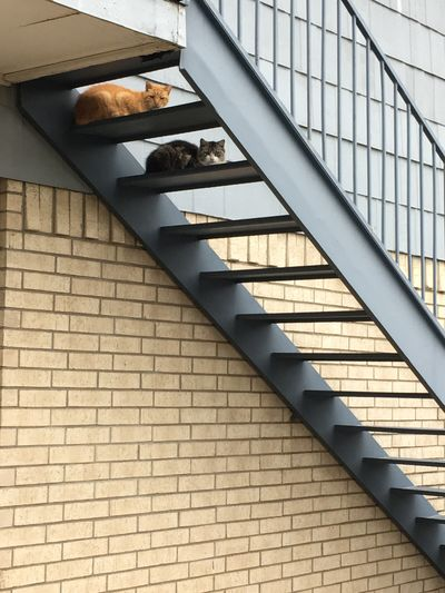 Cats Resting On Steps Against Wall