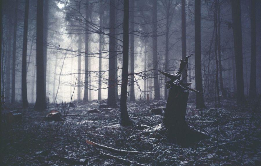 Ektachrome Woods Ektachrome Film Film Photography Filmisnotdead Woods