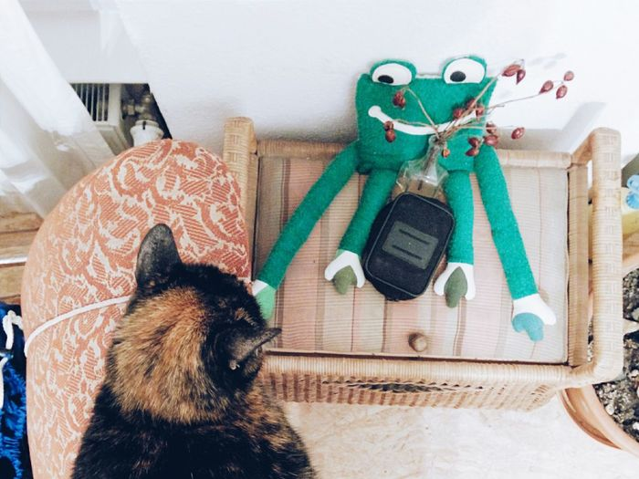 Starring Contest Cat Cat Content Frog Cat And Toys