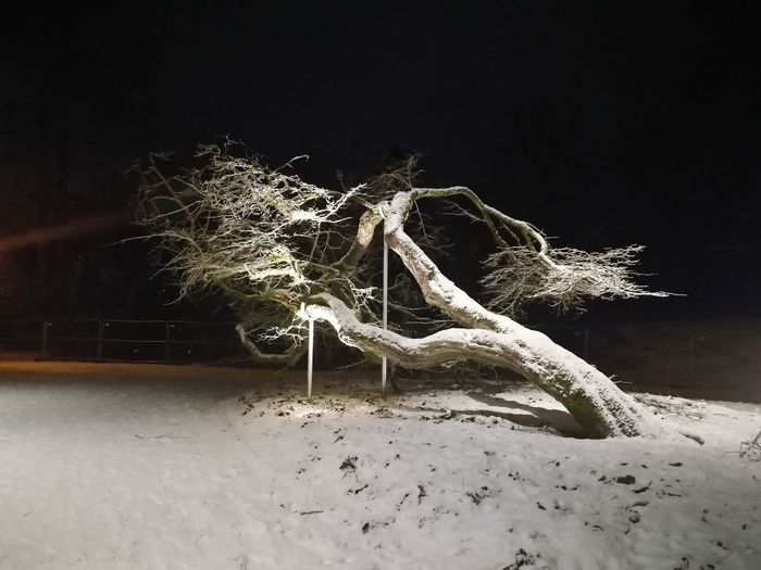 Snow in a really rainy city Snow Tree Outdoors Outdoor Photography Evening Scandinavia Norway Landscape February Bergen