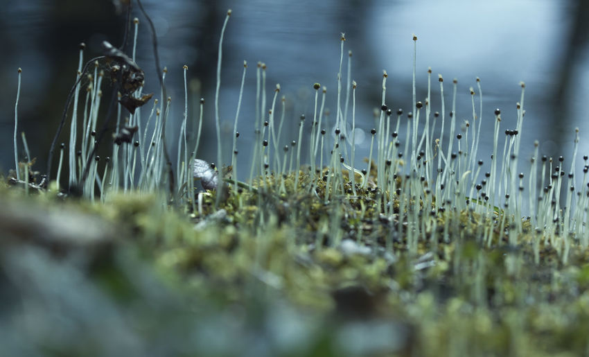 Surface level of tiny mushrooms growing on field
