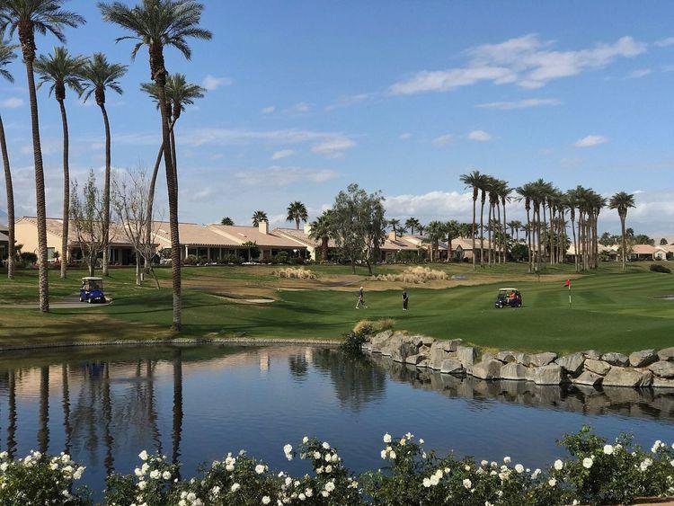 Palm Desert, CA Palm Tree Tree Golf Golf Course Day Grass Nature