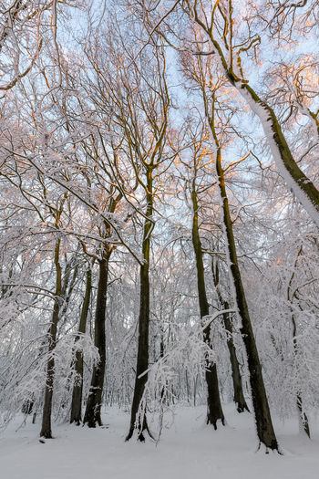Beautiful scene deep in a snow filled and covered British country side forest. Bare Tree Beauty In Nature Branch Cold Temperature Day Forest Landscape Nature No People Outdoors Polar Climate Scenics Sky Snow Tranquil Scene Tranquility Tree Winter