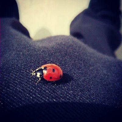 Ladybug Photography Image Photo Closeup