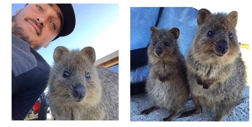 Quokka selfie! Just hanging out! Cheese! Adventure Taking Photos Enjoying Life That's Me Nature OpenEdit Relaxing Lifes A Beach Rottnest Island
